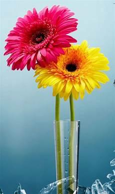 best flower desktop wallpaper 283 best images about beautiful flowers wallpapers