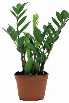 Low Light Apartment Plants 30 Best Indoor Plants For Apartments Best Houseplants