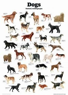 Dog Name Chart Pin On Art