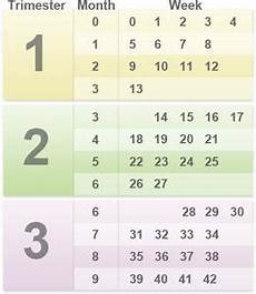 Pregnancy Trimester Weeks Chart How Am I Pregnancy By Weeks Months And