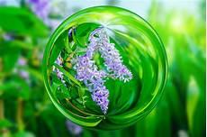 fiori a palla viola fiore viola di petrea flowers nell effetto della palla di
