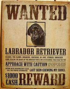 Funny Wanted Posters Wanted Poster Black Lab Tin Sign Labrador Retriever Funny