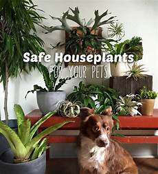 Low Light Pet Safe Indoor Plants Our 10 Favorite Pet Safe Indoor Plants And 7 To Avoid