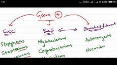 Gram Positive And Gram Negative Chart Gram Positive Vs Negative Youtube