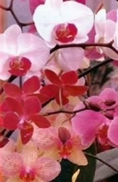 mandare dei fiori il linguaggio dei fiori significato dei fiori