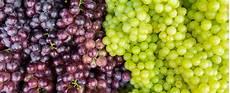 uva da tavola uva da tavola venerd 236 27 a noicattaro bari congresso