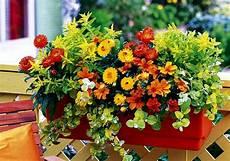 piante da davanzale casa segreti di nonna cuore