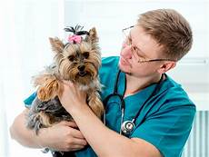Bladder Cancer Dogs Bladder Cancer In Dogs