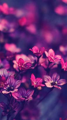 flower arrangements iphone wallpaper purple flowers hd ios7 wallpaper for iphone and ipod