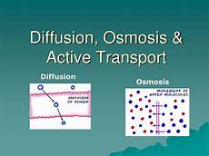 what type of transport is osmosis ppt diffusion osmosis amp active transport powerpoint