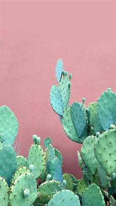 iphone 7 cactus wallpaper cactus my multitudes wallpaper cactus iphone