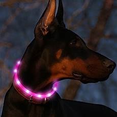 Dog Led Light 5 Best Led Light Up Dog Collars Staying Visible At Night