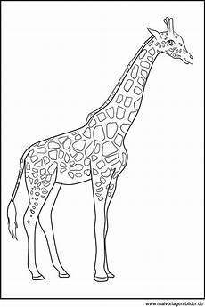 Ausmalbilder Drucken Giraffe Title Mit Bildern Malvorlagen Tiere Giraffen