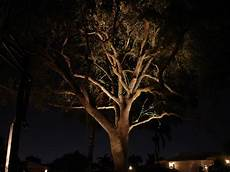Outdoor Lighting For Trees Low Voltage Nitelites Of Jacksonville The Landscape Lighting