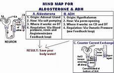 Adh Vs Aldosterone Venn Diagram Mind Map For Aldosterone And Adh Anatomy Amp Physiology