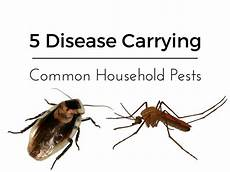 Common Household Pests 5 Disease Carrying Common House Pests