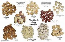 Nut Identification Chart Fanatic Cook What Is A Serving Of Nuts