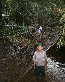 web bid photos world s strongest spider webs found