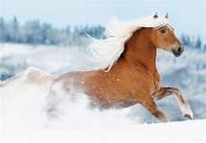 pferde im schnee 2020 fotoworkshop www boiselle shop