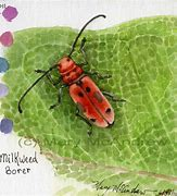 "Image result for ""rhubarb-curculio"""