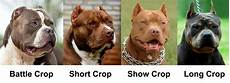Bully Ear Crop Chart Dog Ear Cropping Styles After Care Cost Dogs Cats Pets