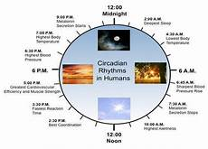 Circadian Rhythm Chart What It Means To Keep To A Circadian Rhythm Selfhacked