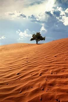 desert iphone wallpaper desert tree iphone wallpaper hd