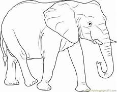 elephant coloring page free elephant coloring