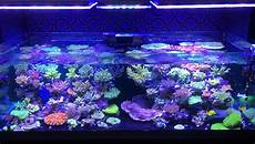 Best Aquarium Lights Orphek Atlantik V3 Plus Reef Lights Now Ready To Ship
