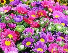 immagini piã di fiori moriago della battaglia mosnigo 2 170 mostra mercato di fiori