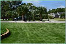 Zorro Zoysia Growing Grasssuperior Sod Mulch And Sod In Wilmington