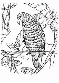 malvorlagen zum ausdrucken ausmalbilder papagei kostenlos 1
