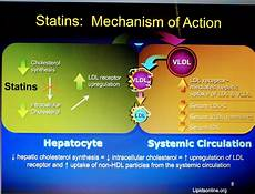 Statin Mechanism Of Action Pin On Fnp Advanced Health Assessment