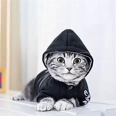 cat clothes for black letter pet cat clothes winter suit warm soft coat