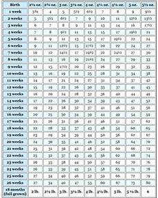 Average Cat Weight Chart How Much Does A Scottish Fold Weight Scottish Fold Cats