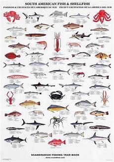 Shellfish Chart South American Fish Amp Shellfish Poster Sea Fish Fish