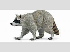 Raccoon Toy Animal Miniature at Animal World®