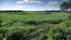 Malvorlagen Urwald Europa Steffens Entdeckt Polen Europas Letzter Urwald Doku