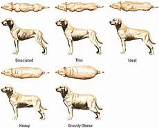 Ideal Weight For Dogs Weight Chart What Is The Average Weight For A Mix Breed Chihuahua