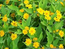Yellow Flower Wallpaper by Yellow Flowers Global Wallpapers