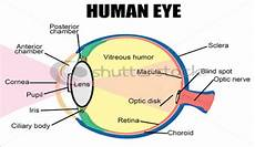 How Light Enters The Eye How Does The Human Eye Work Magic Of Eyes
