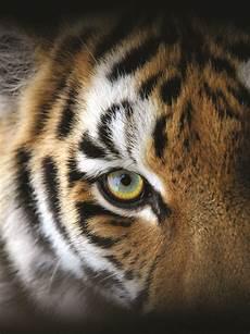 Wildlife Major Top 10 Ways To Save Wildlife Shareamerica
