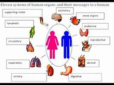 11 Body Systems What Are 11 Messages Of Our 11 Organ Systems To Us Youtube