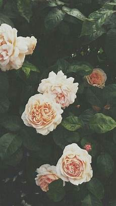 flower lockscreen wallpaper flowers lockscreens