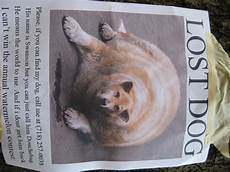 Lost Dog Poster Maker Lost Dog Poster Myconfinedspace