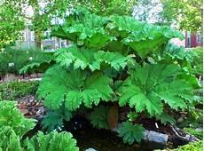 sempreverdi da giardino piante sempreverdi da giardino resistenti al freddo