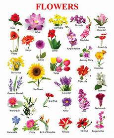 Flower Chart With Names And Pictures Flowers In Picture For Kids поиск в Google