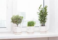 piante da davanzale piante d appartamento in vasi sul davanzale immagine stock