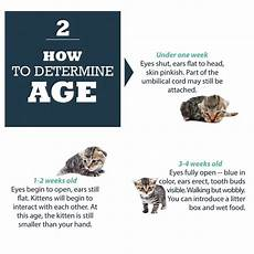 Baby Kitten Age Chart Found Baby Kittens Southern Pines Animal Shelter