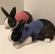 rabbit clothes for bunnies rabbit clothes rabbit sweater rabbit costume sweater